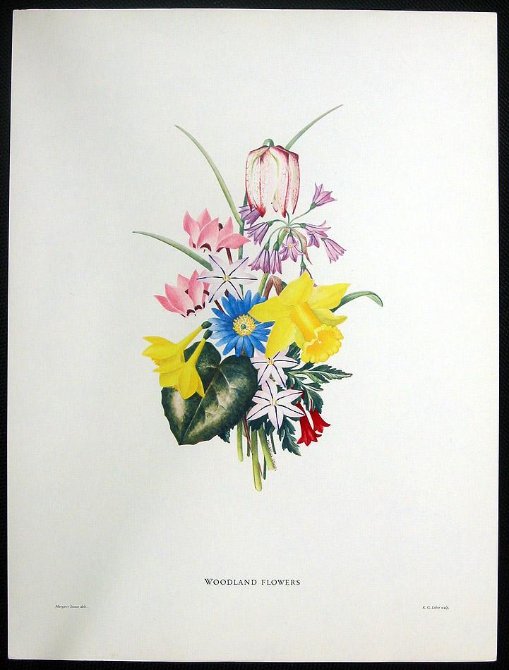 Woodland Flowers Large Rare Botanical Color Art Print Ebay